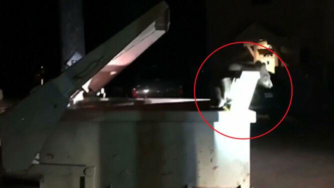 Niedźwiadek utknął w śmietniku. <br />Z pomocą przyszli policjanci