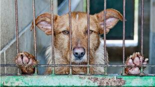 """""""Zwierzę nie rozumie, dlaczego zostało porzucone. Będzie kochało i czekało"""""""