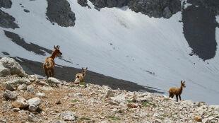 W Tatrach zamykają szlaki dla narciarzy. W trosce o żyjące tam zwierzęta