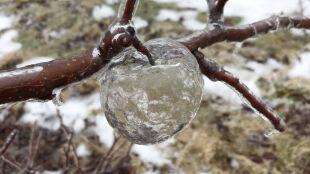 """Na gałęziach zawisły lodowe """"jabłka duchy"""""""